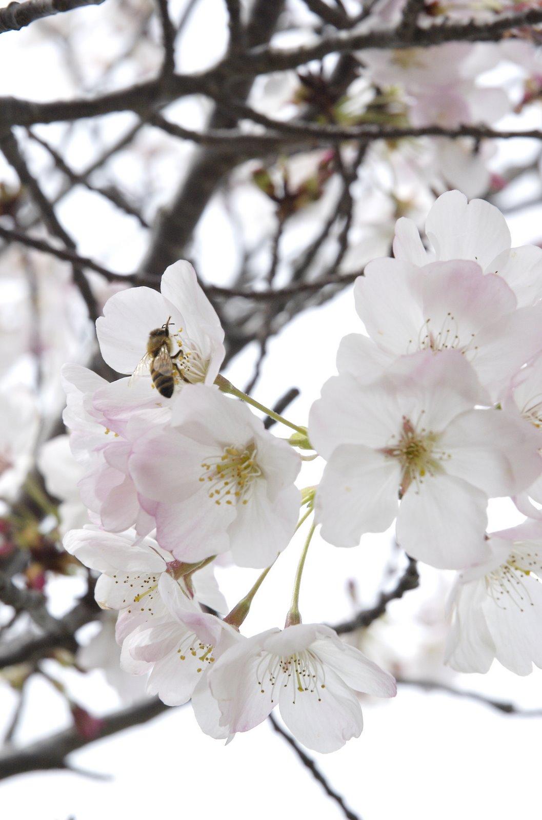 [Blossom.jpg]