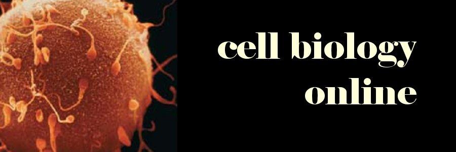 blog biologi sel