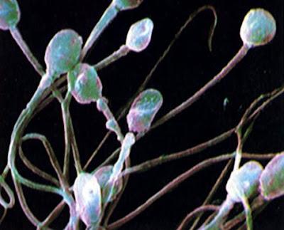 فوائد الحيوانات المنويه semen-sperm.jpg