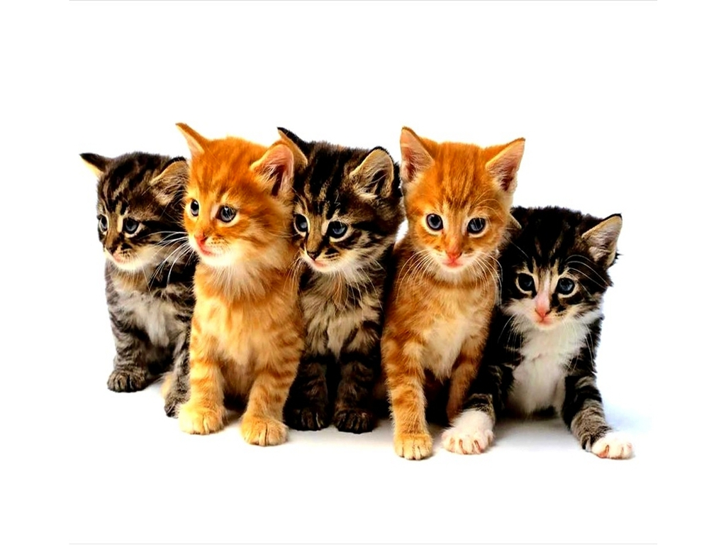 home search results for kitten wallpaper desktop page 2