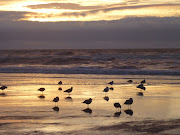 Birds on Blackpool beach during sunset