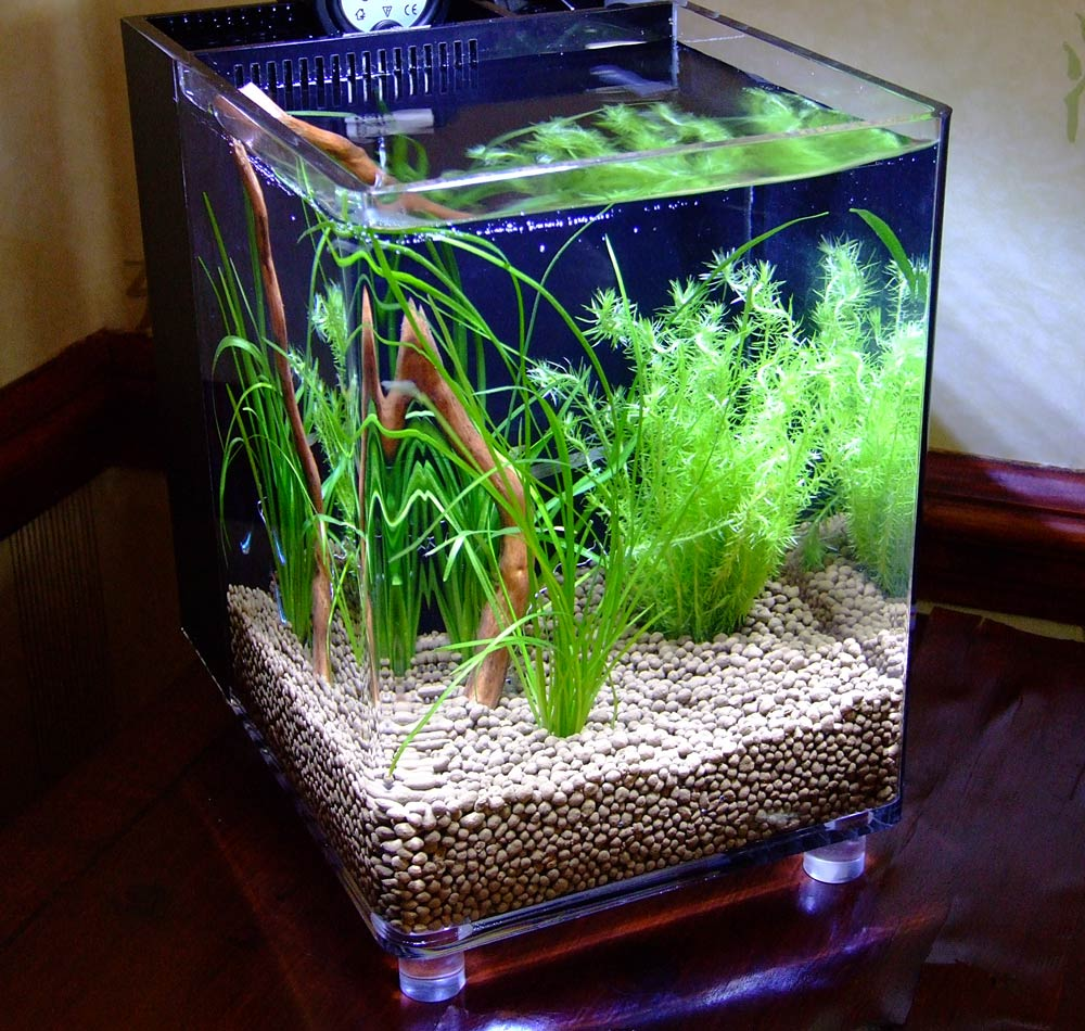 The Nano Cube Aquarium Something Fishy About Life