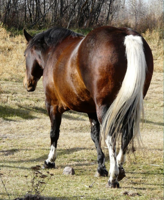 Rare horse markings