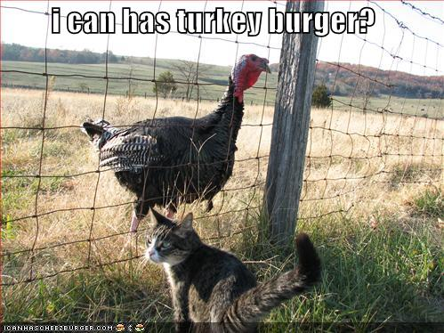 funny turkey pictures. and share a funny moment.