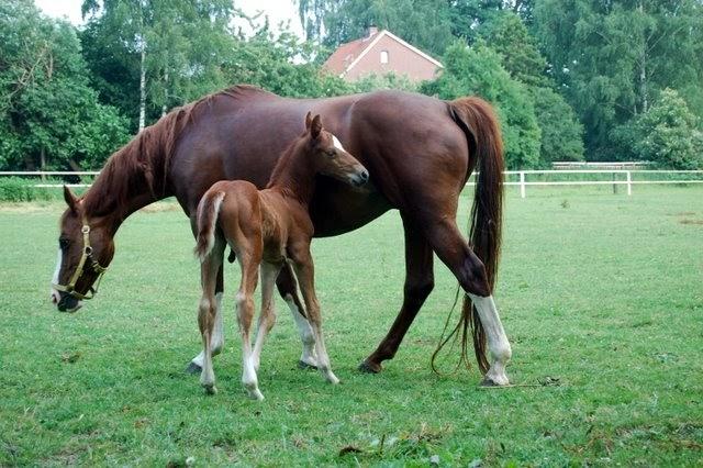 pferde als hintergrundbild f r desktop handy oder homepage gratis und kostenlos downloaden. Black Bedroom Furniture Sets. Home Design Ideas