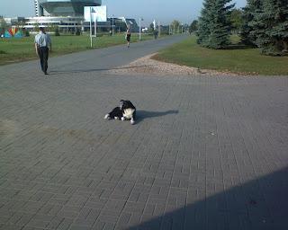 Собака на солнышке
