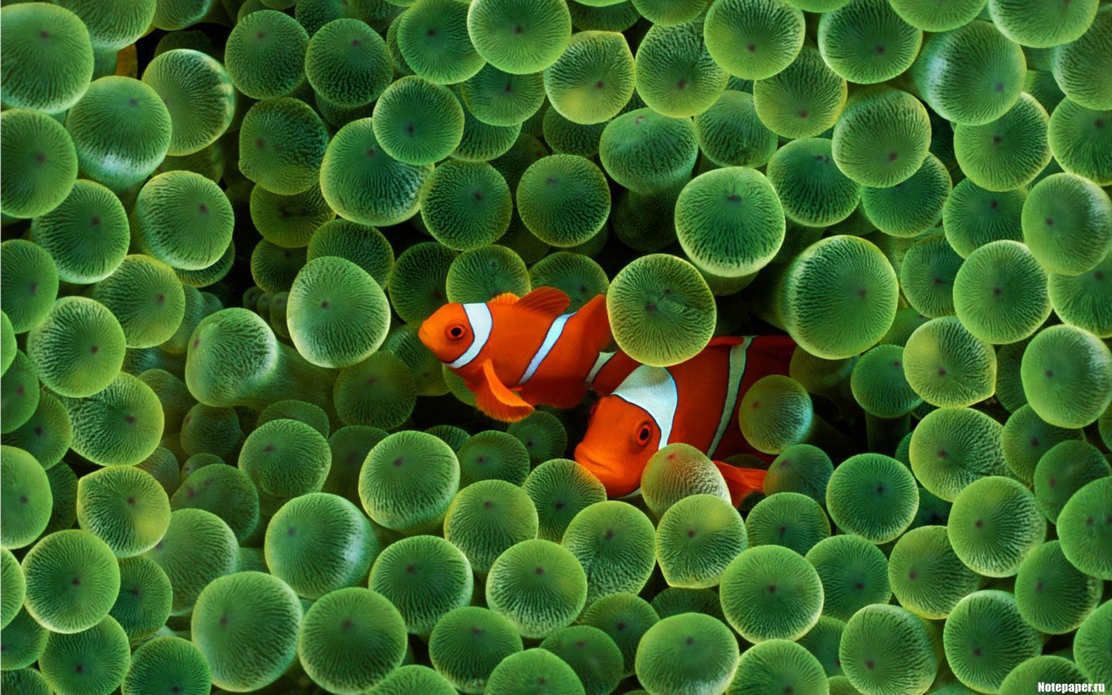 http://1.bp.blogspot.com/_tWeYU17hDgA/TNWUTWjwwXI/AAAAAAAAHUk/13qi-JhrtyA/s1600/laba-ws.blogspot.com_Animals_Nature_HD_0001.jpg
