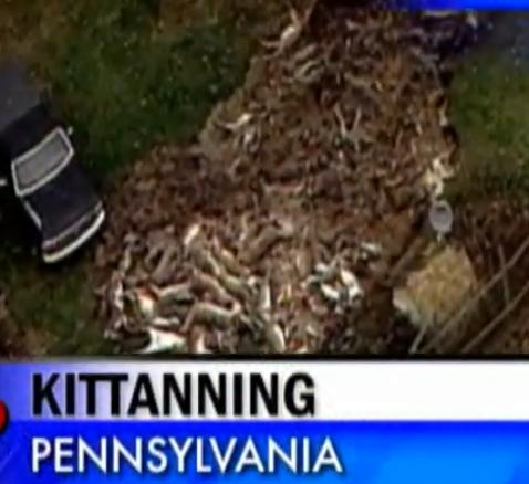 Hundreds of Rotting Deer Carcasses Pile In Yard Causing Stinks