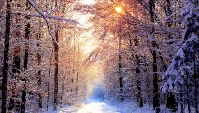 Max Graham Ft. Neev Kennedy-Sun In The Winter (Lyrics, Alex M.O.R.P.H, Original & Estiva Remix) HD