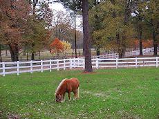 Divine Acres Ranch