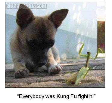 everybody was Kung Fu Fightin