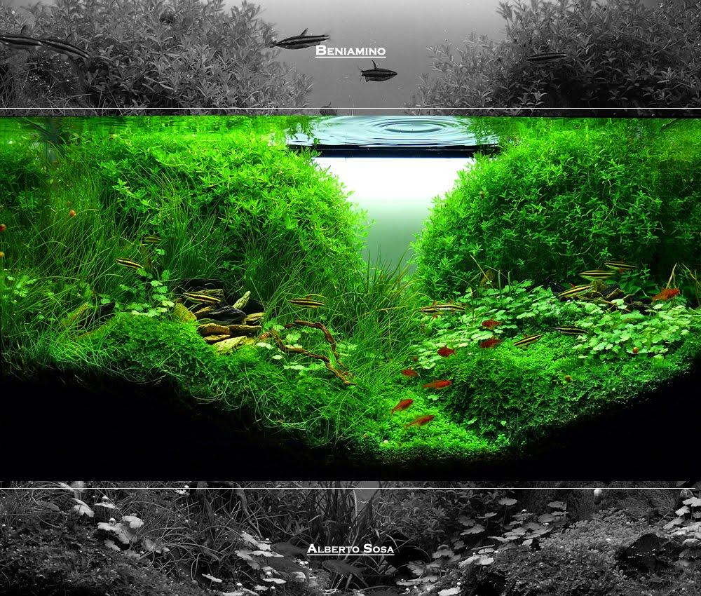 Beniamino page 2 aquascaping world forum - Aquascape espana ...