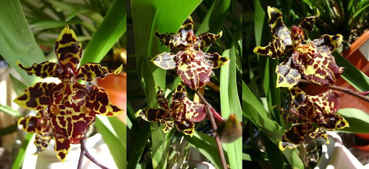 Alguns dos meus hobbies... Comecemos pelas Orquídeas!