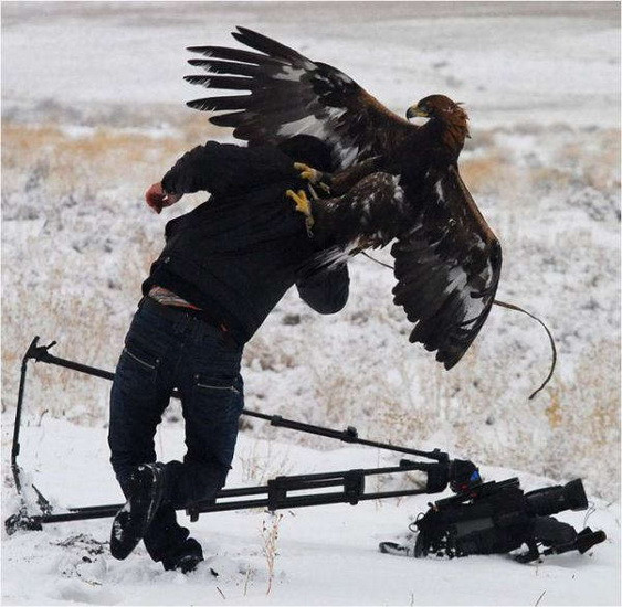Bird Attacking a Cameraman
