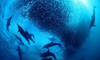 Dolphin Hunters