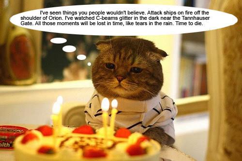 Replicant Birthday Cat
