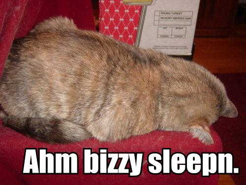 Ahm bizzy sleepn.