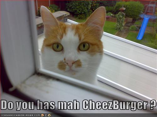 Do you has mah CheezBurger?