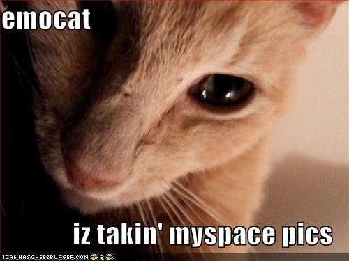 emocat is takin' myspace pics