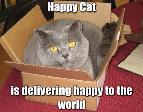 Happy cat is delivering happy to the world
