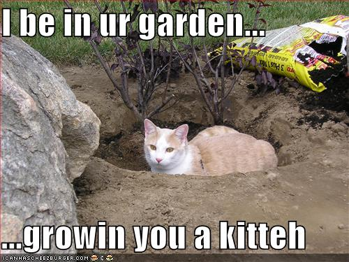 I be in ur garden... ...growin you a kitteh