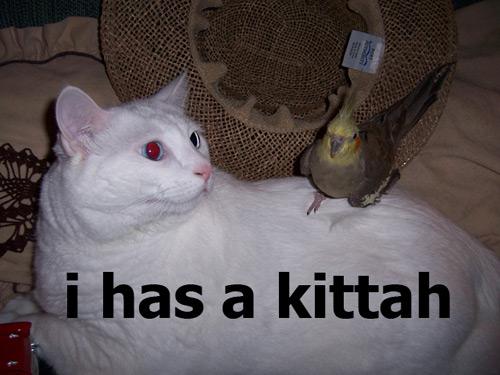 i has a kittah
