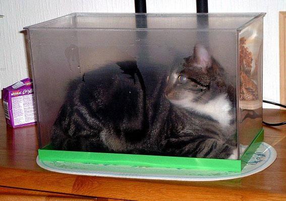 Cat in an Aquarium