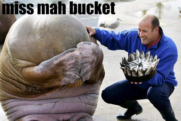 Miss mah bucket