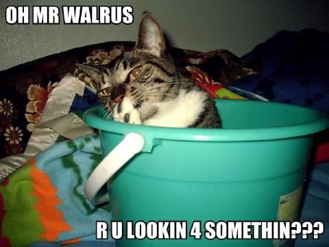 Oh Mr Walrus
