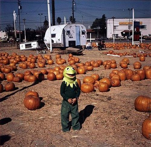 Pumpkin Patch Boy in Kermit Mask
