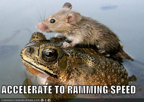 ACCELERATE TO RAMMING SPEED - Funny Animal Pics