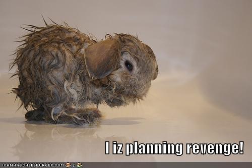 I iz planning revenge