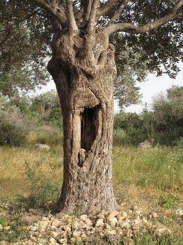 Yawn Tree