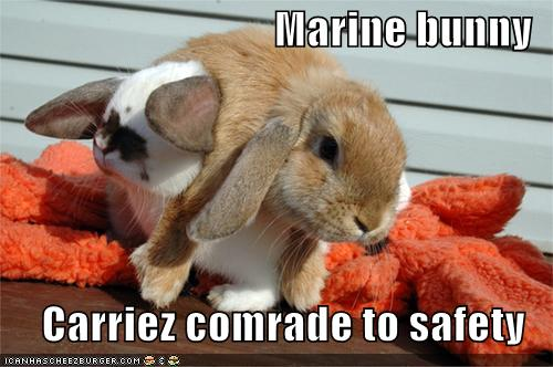 Marine bunny Carriez comrade to safety