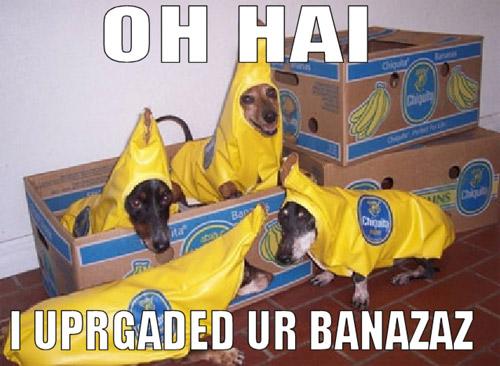 OH HAI I UPRGADED UR BANAZAZ