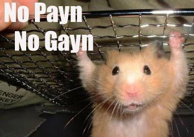 No Payn No Gayn