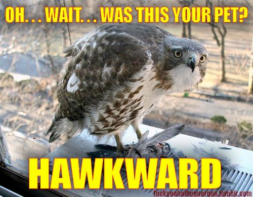 OH...WAIT...WAS THIS YOUR PET HAWKWARD