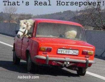That's Real Horsepower!