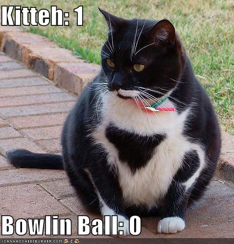 Kitteh Bowlin Ball