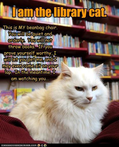library cat beanbag chair books