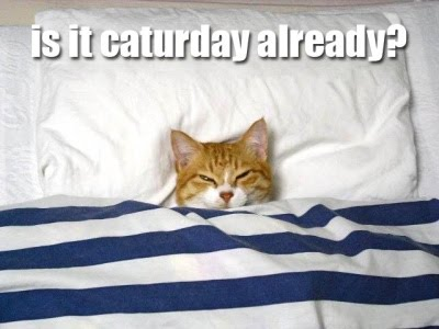 is it caturday already