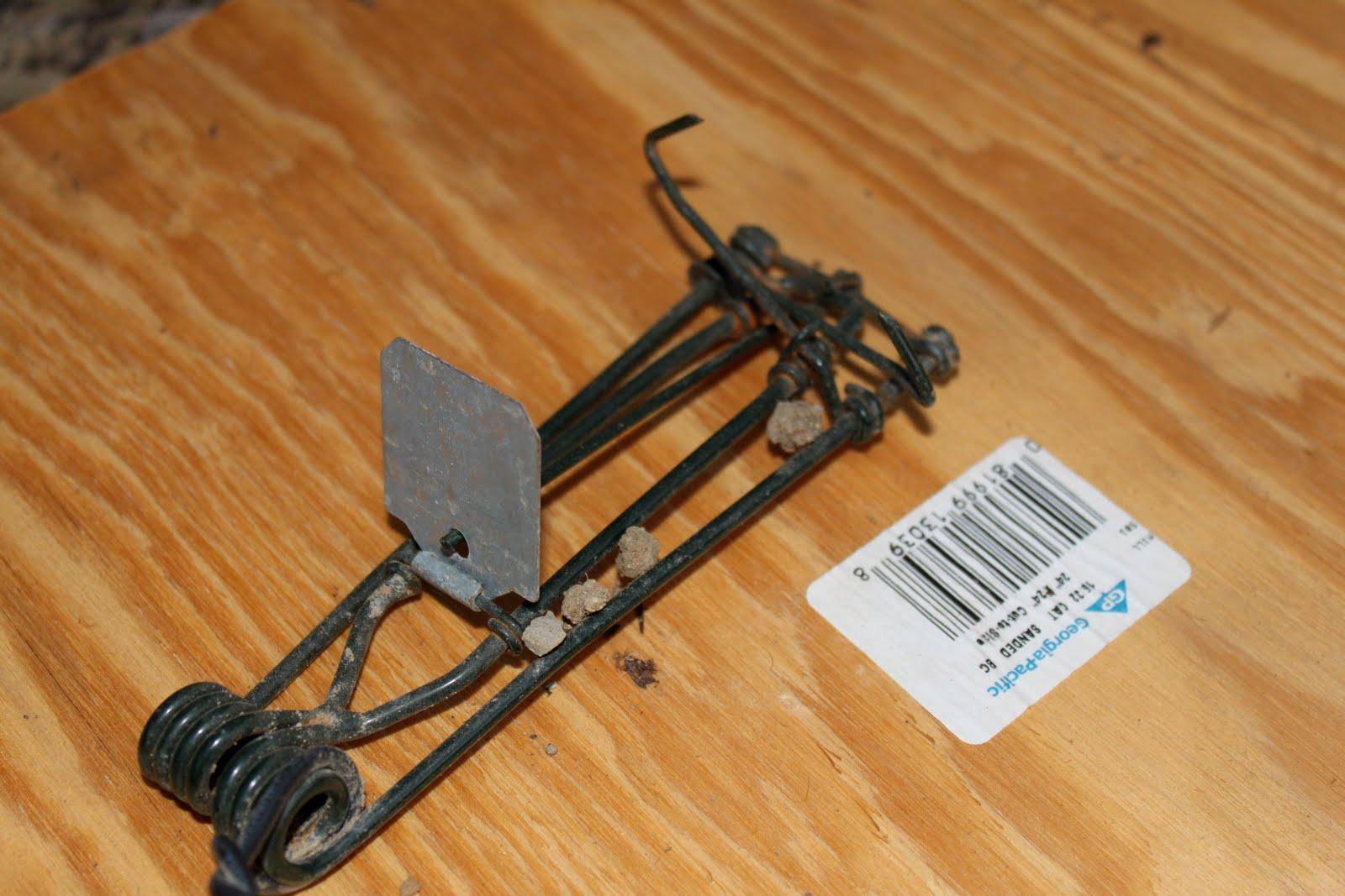 macabees gopher traps