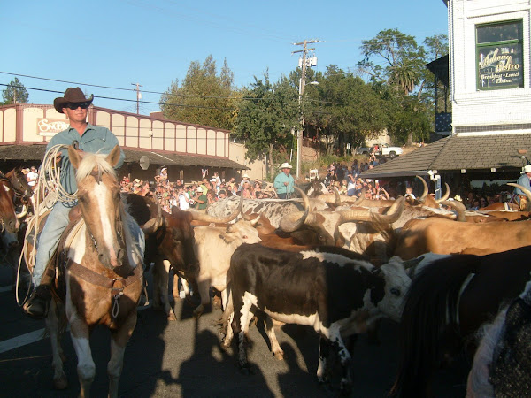 Running of the Bull's Folsom, CA