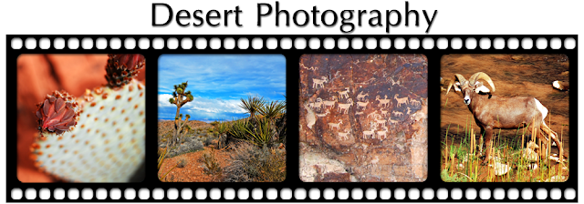 Desert Photography Blog Design