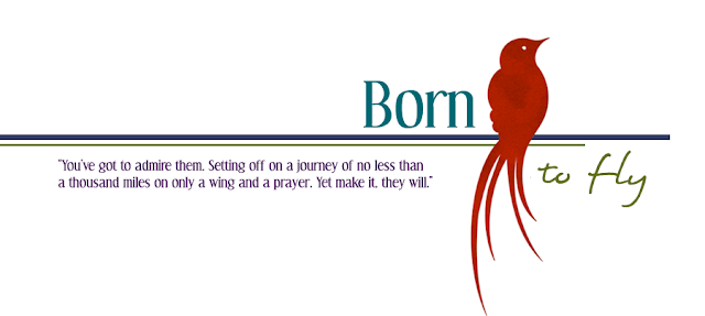 Born to Fly Blog Design