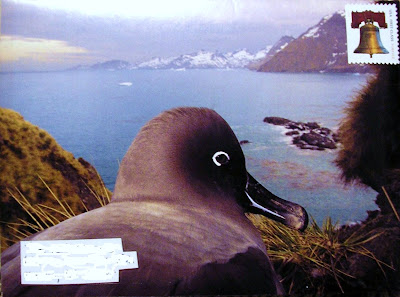 A Mail Art envelope that is a close up photograph of a bird's eye with pretty scenery in the background