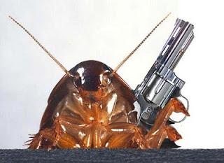 Baratas Cucarachas