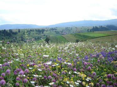 Subcetate-Filpea: Câmp cu flori