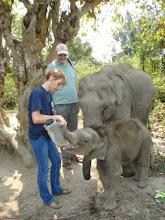 Elephant calves Assam