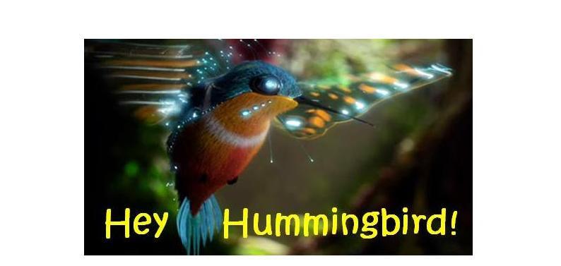 Hey Hummingbird